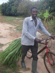 Grasses being delivered by bike to the HIV/ AIDS grasscutter shed.